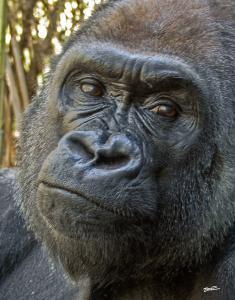 Ape-3