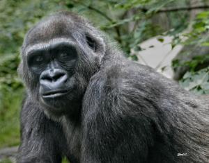 Cousin Ape