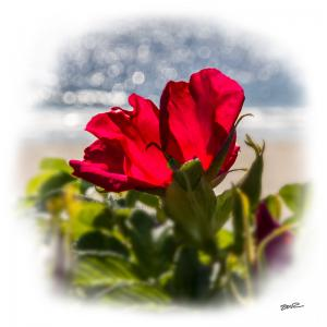 Flower by the Sea