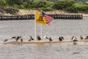 Patriotic Sandbar Birds