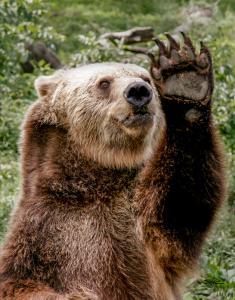 Hi Teddy1