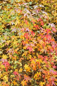 Autumn Profusion