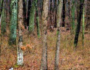 Bambi & Friends