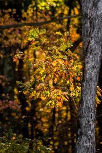 Fall Spotlight