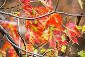Speckled Leaves