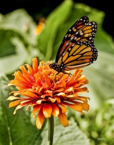 Monarch's Realm