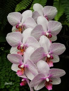 Orchid - 4