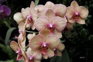 Orchids - 17