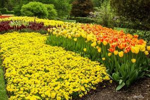 Springtime - Longwood Gardens