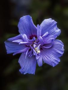 Shari's Flower
