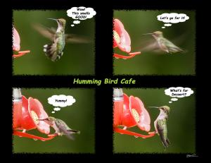 Humming Bird Cafe