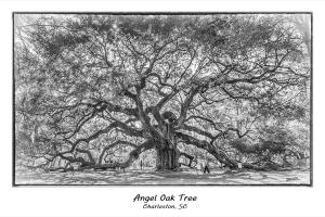 Angel Oak Tree Charleston