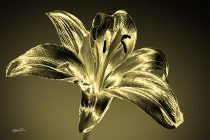 Golden Lily-02