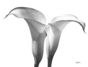 Lily-5b