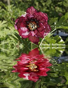 Eternal Reflections