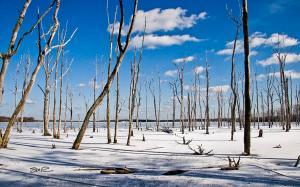 Winter Scene - Manasquan Reservior